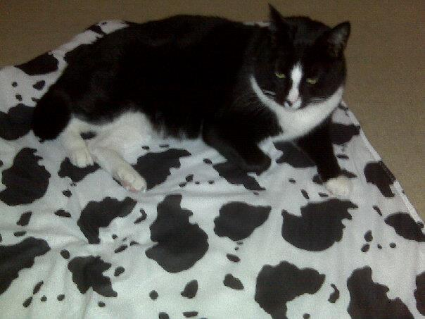 One of my last projects, a camouflage blanket for Henry